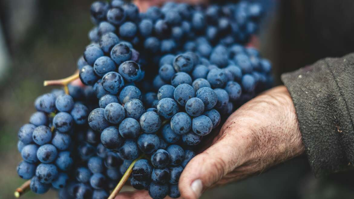 Wine 101: Its History and Interesting Facts About Wine