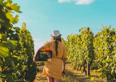 5 Countries That Make the Best Wine